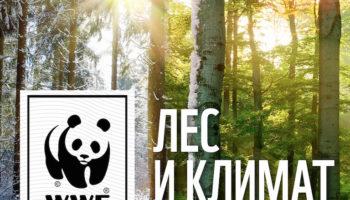 8 тысяч учителей присоединились к всероссийскому уроку WWF «Лес и климат»