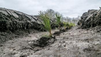 В рамках проекта PosadiLes в России этой весной высажено 115 тысяч деревьев