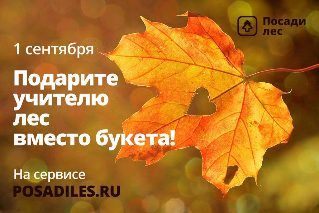 """В преддверии 1 сентября Движение ЭКА запустило акцию """"Лес вместо букета"""""""