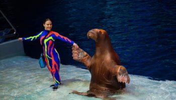 Мюзикл «Сон в летнюю ночь» возвращается на водную сцену «Москвариума»
