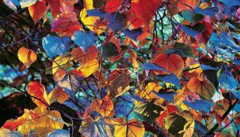 В Галерее Классической Фотографии будут представлены новые работы знаменитого Кристофера Беркетта