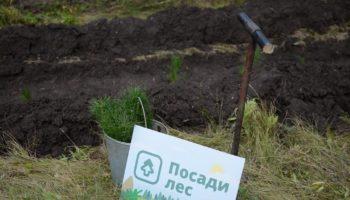 Благодаря народному финансированию в России будет высажено 60 тысяч деревьев