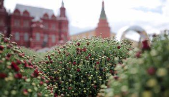 На Манежной площади построили огромную карту ВДНХ из хризантем
